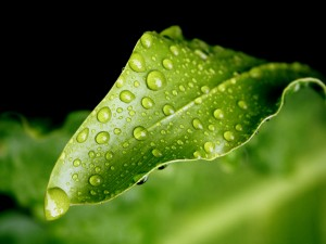 nature-pictures-rain-drops-on-green-leaf-nautre-pictures